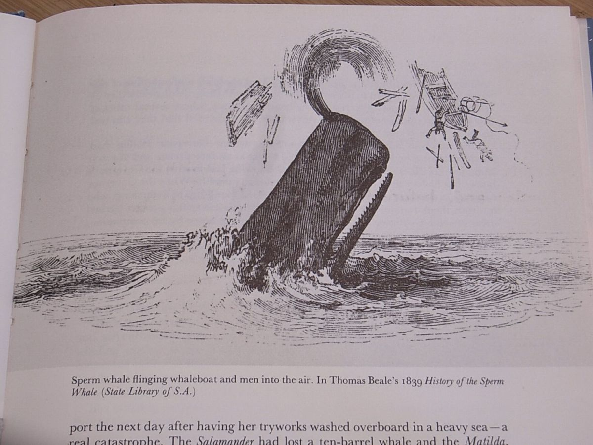Sperm whale flinging whaleboat and men into the air, in Beale's 1839 History of the Sperm Whale