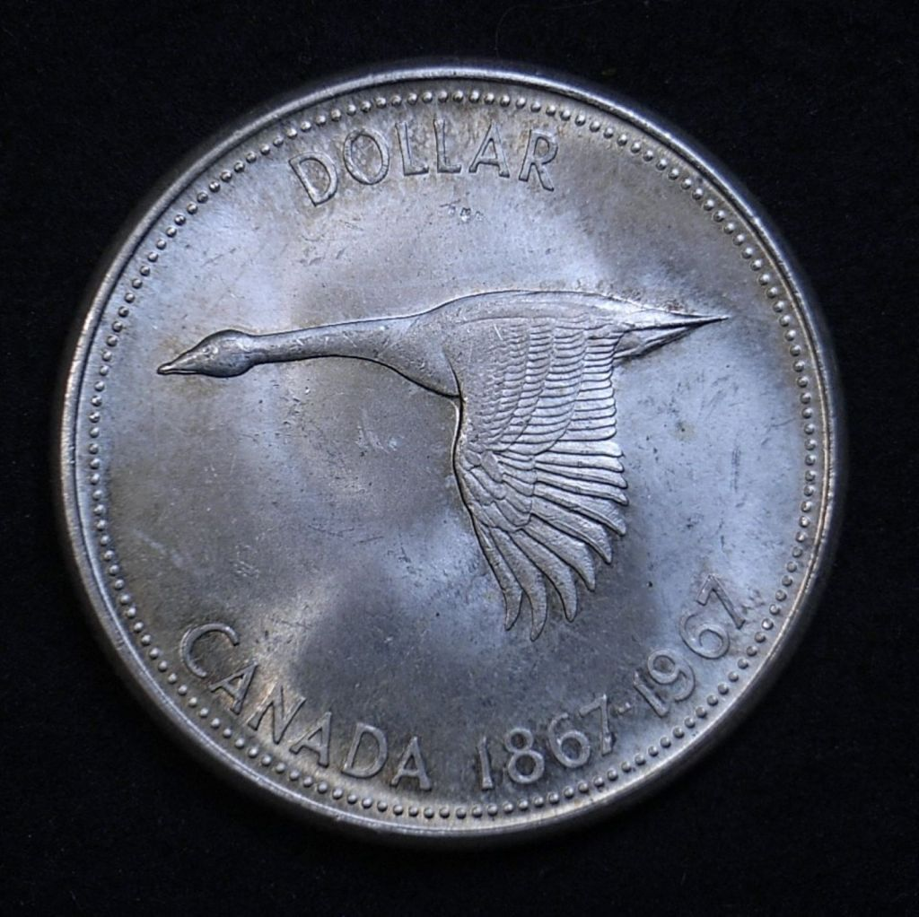 Close up of 1967 Canadian Goose Dollar reverse highlighting the coin's detail and lustre using a different lighting angle