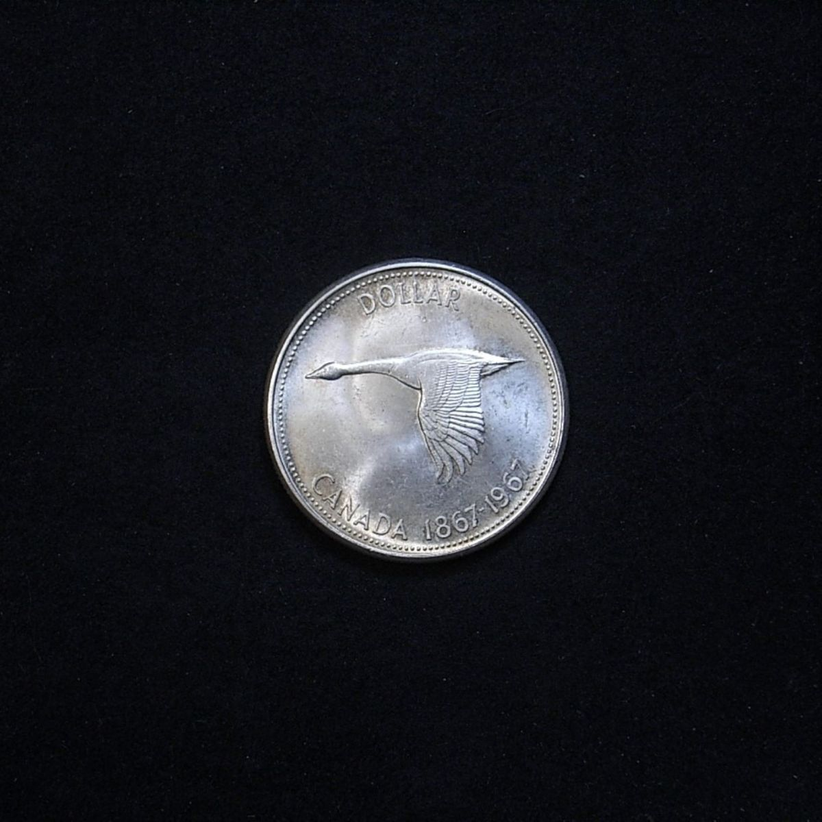 1967 Canadian Goose Dollar reverse highlighting the coin's lustre